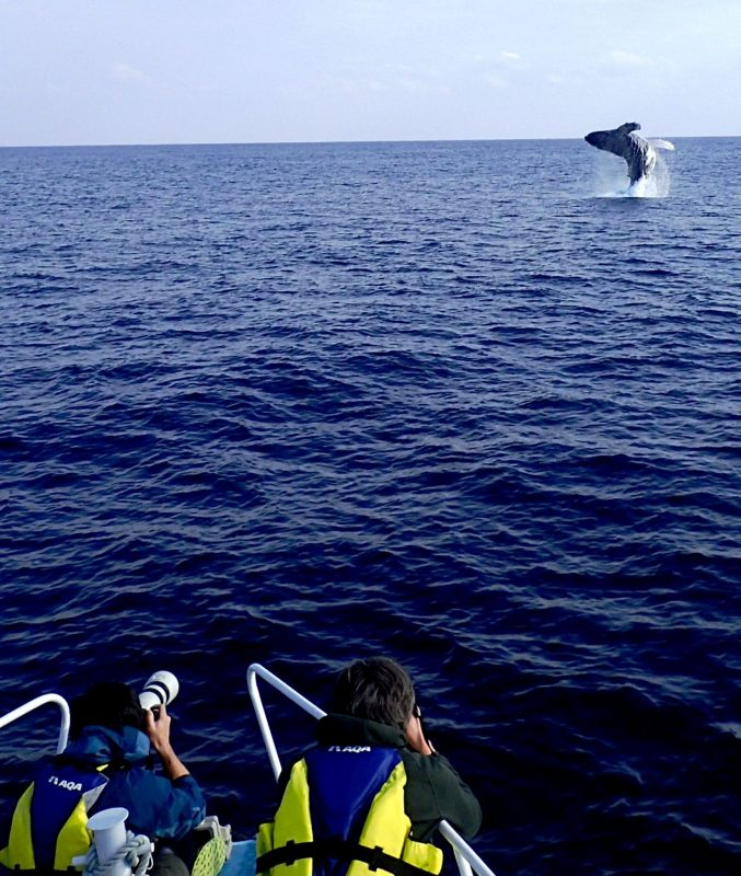 出航5分でクジラに会えました♡