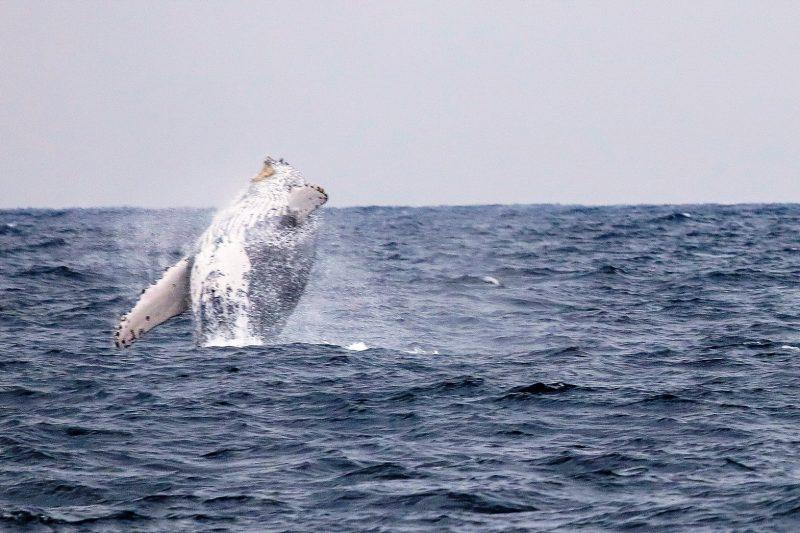 ダイナミックなクジラの姿を写真に!!