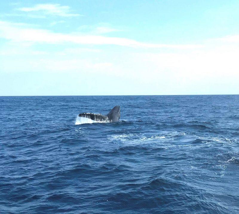 本日のクジラも大暴れ♪