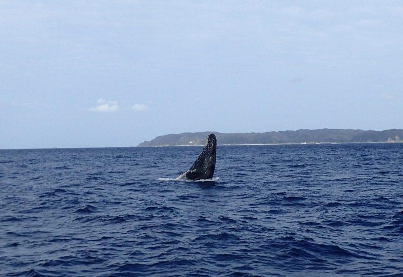 本日もクジラ日和