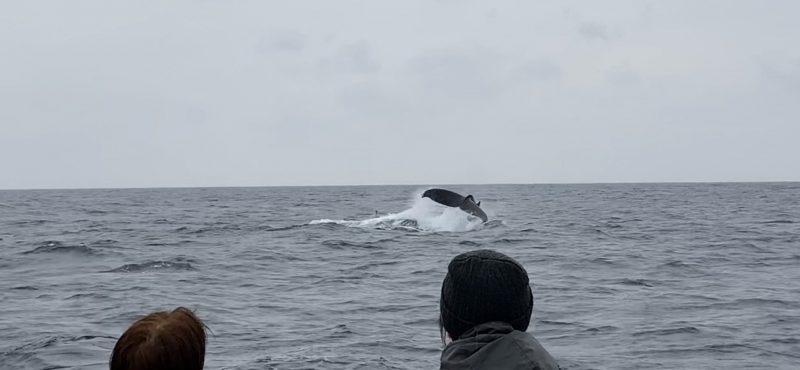 クジラと一日中遊べました~!!