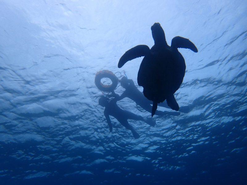 ウミガメに会ってきました!!