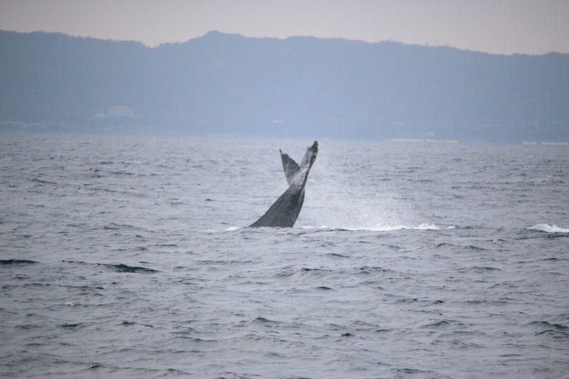 クジラ2頭見れましたー!!