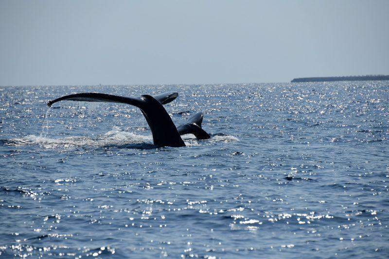 様々なクジラの行動が見れた1日でした♪