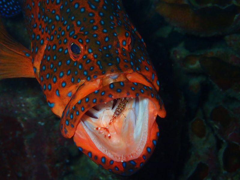 海の生き物たち!