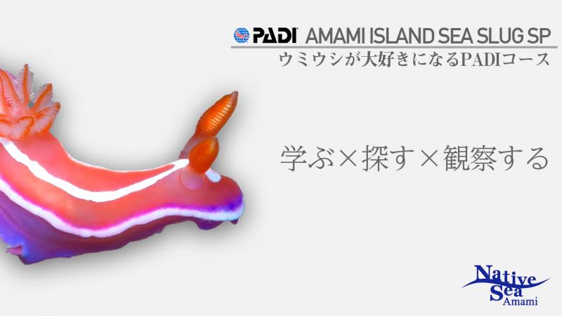 【12月~6月】ウミウシスペシャリティコース開催中!