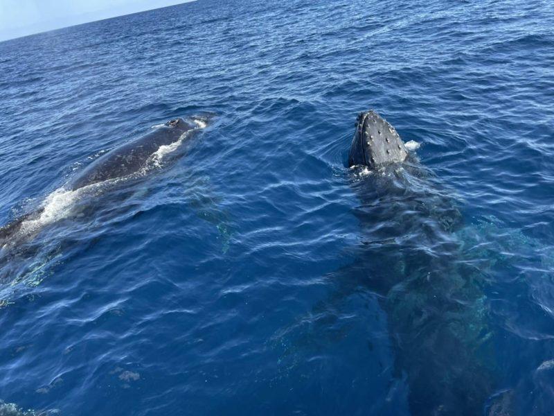 春の様な陽気…と最高のクジラに出会えました!!!