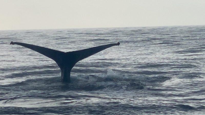 クジラと出会えるのもあと少し。。。