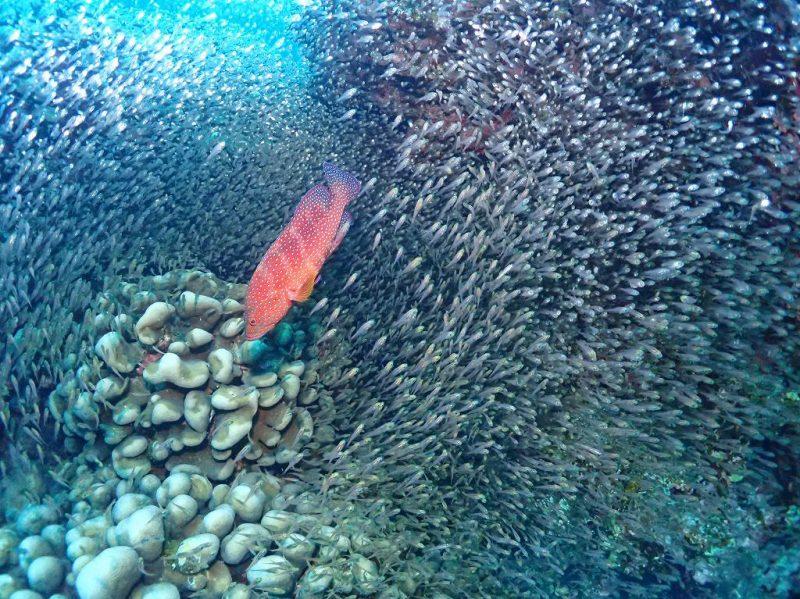 狙われる魚たち。